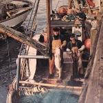 """""""Burøy"""" leverer fangst i Svolvær i 1977"""